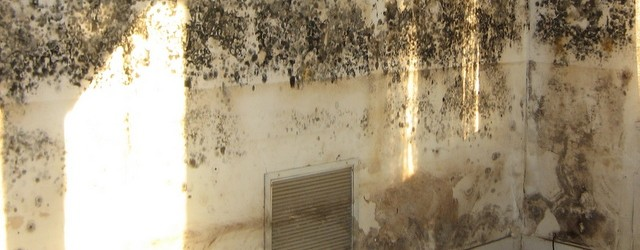 Mold We Ve All Experienced This Nasty Critter And It Has Most Likely Reared Its Ugly Head Once Again In The Wake Of Hurricanes Florence Michael